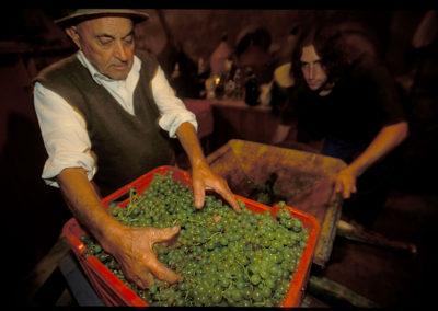 Un contadino con la sua uva per la produzione di vino